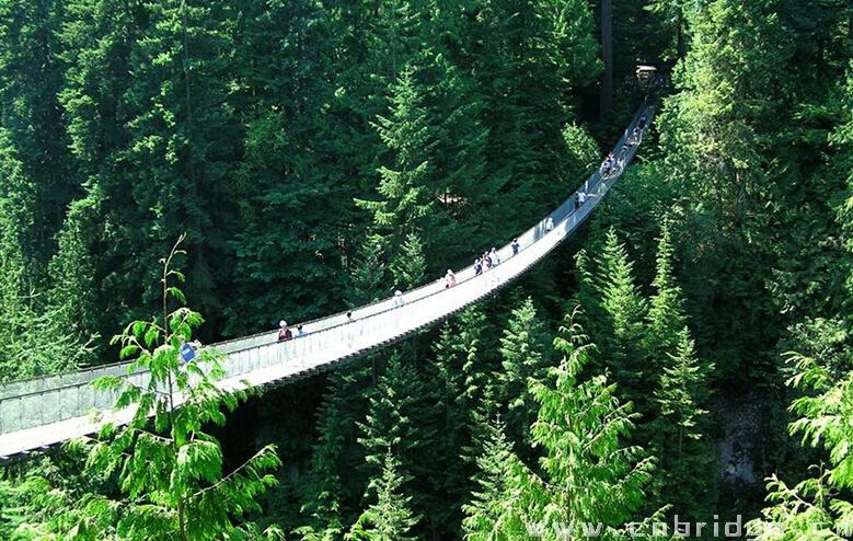 高空拍摄森林图片
